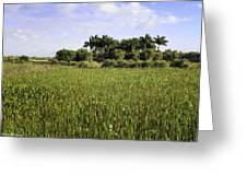 Green Cay Wetlands Greeting Card
