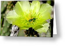 Green Cholla Beauty Greeting Card