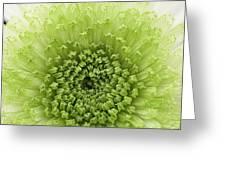 Green Chrysthanthemum Greeting Card