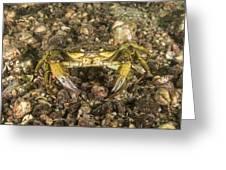 Green Crab Greeting Card