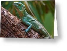 Green Crested Basilisk Greeting Card