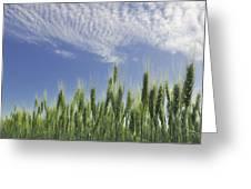 Green Crops Northwest Of Edmonton Greeting Card