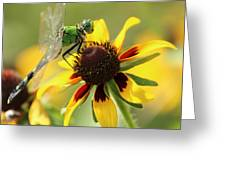 Green Dragonfly Greeting Card
