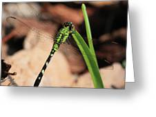 Green Dragonfly On Grass Square Greeting Card