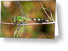 Green Dragonfly On Twig Square Greeting Card