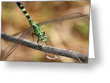 Green Dragonfly Square Greeting Card