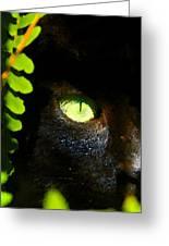 Green Eyed Black Cat Greeting Card