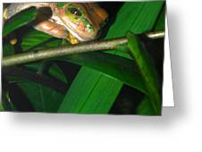 Green Eye'd Frog Greeting Card