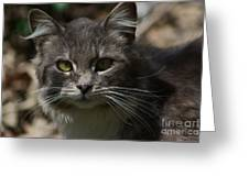 Green Eyed Kitty Cat Greeting Card