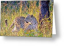 Green Eyed Leopard Greeting Card