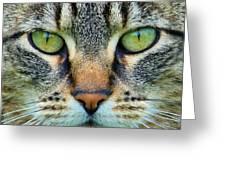 Green Eyez Greeting Card