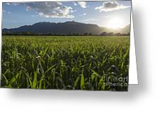 Green Field In Sunset Greeting Card