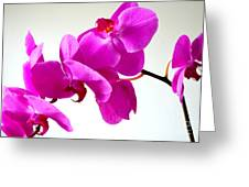 Green Field Sweetheart Orchid No 1 Greeting Card