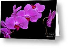 Green Field Sweetheart Orchid No 2 Greeting Card