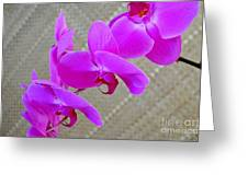 Green Field Sweetheart Orchid No 3 Greeting Card