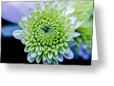 Green Flower Greeting Card by Amr Miqdadi