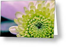 Green Flower2 Greeting Card by Amr Miqdadi