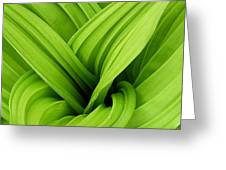 Green Folds Greeting Card
