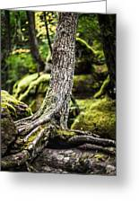 Green Forest Greeting Card by Aaron Aldrich