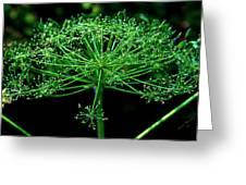 Green Frills II Greeting Card
