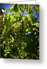 Green Grapes On The Vine Greeting Card