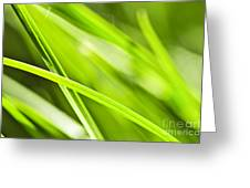 Green Grass Abstract Greeting Card by Elena Elisseeva