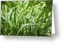 Green Grass After Rain Greeting Card