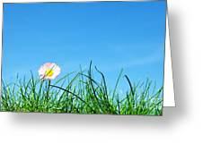 Green Grass And A Flower Greeting Card
