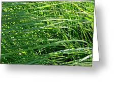 Green Grass Growing Greeting Card