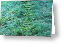 Green Grass Pathway. Greeting Card