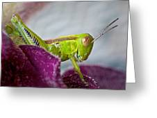 Green Grasshopper I Greeting Card
