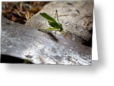 Green Grasshopper On Axe Greeting Card