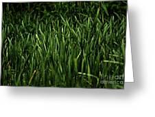 Green Green Grass ... Greeting Card