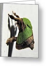 Green Hair Moth Greeting Card