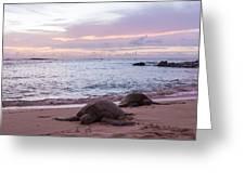 Green Hawaiian Sea Turtles At Sunset - Oahu Hawaii Greeting Card by Brian Harig