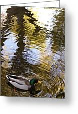 Green Head Mallard Duck Greeting Card