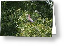 Green Heron 2013 Greeting Card