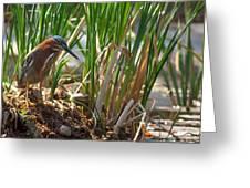 Green Heron Fishing Greeting Card by Kathleen Bishop