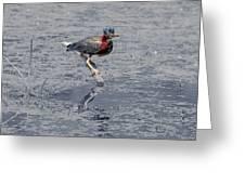 Green Heron In Swannanoa North Carolina Greeting Card