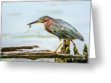 Green Heron Perfection Greeting Card