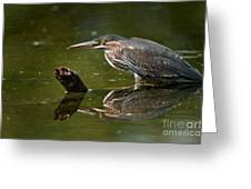 Green Heron Pictures 491 Greeting Card