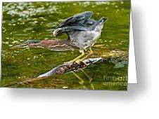 Green Heron Pictures 522 Greeting Card