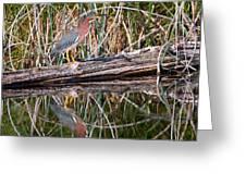Green Heron Reflections Squared Greeting Card