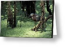 Green Heron Greeting Card by Steven Ralser
