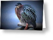 Green Heron Vignetted  Greeting Card