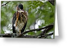 Green Heron Waves Hello Greeting Card