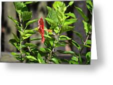 Green Hummingbird On Red Hibiscus Flower 5 Of 10 Greeting Card