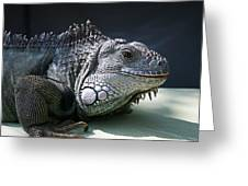 Green Iguana 1 Greeting Card