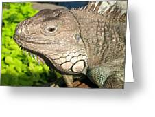 Green Iguana Face Greeting Card