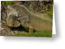 Green Iguana Guayaquil Ecuador Greeting Card